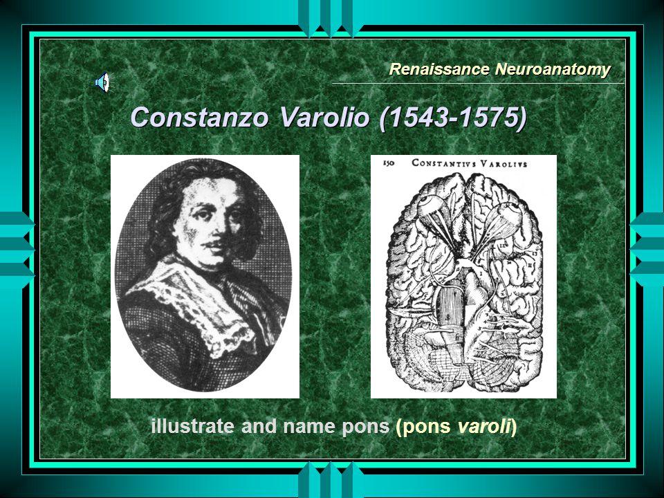 Constanzo Varolio (1543-1575) illustrate and name pons (pons varoli) Renaissance Neuroanatomy