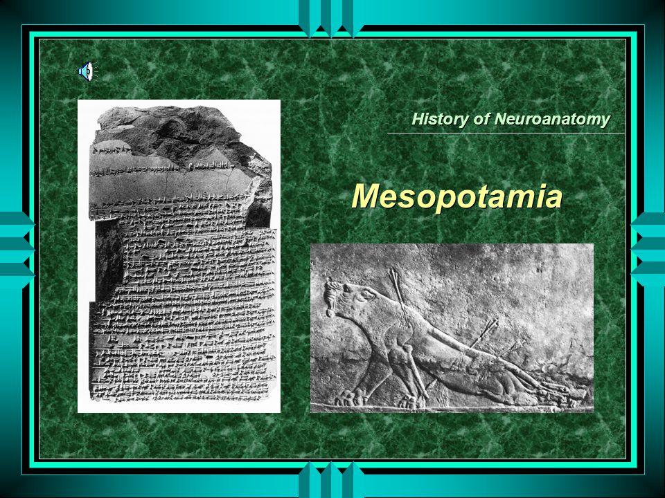 Mesopotamia History of Neuroanatomy