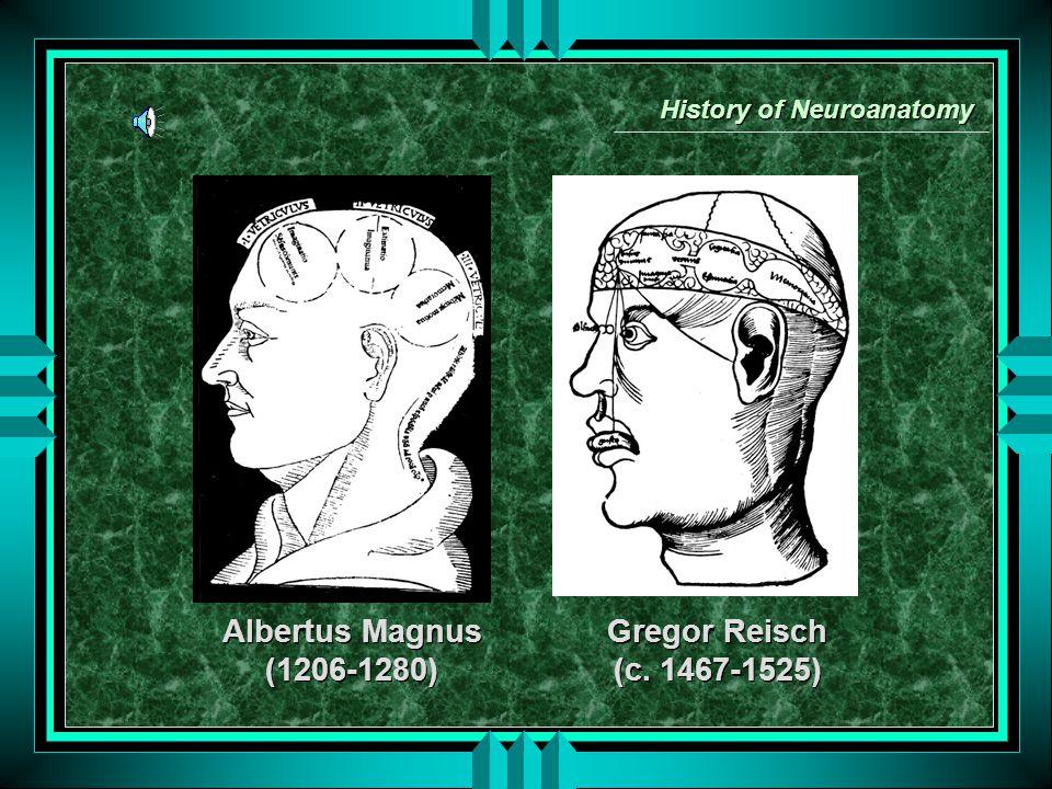 History of Neuroanatomy Albertus Magnus (1206-1280) Albertus Magnus (1206-1280) Gregor Reisch (c.