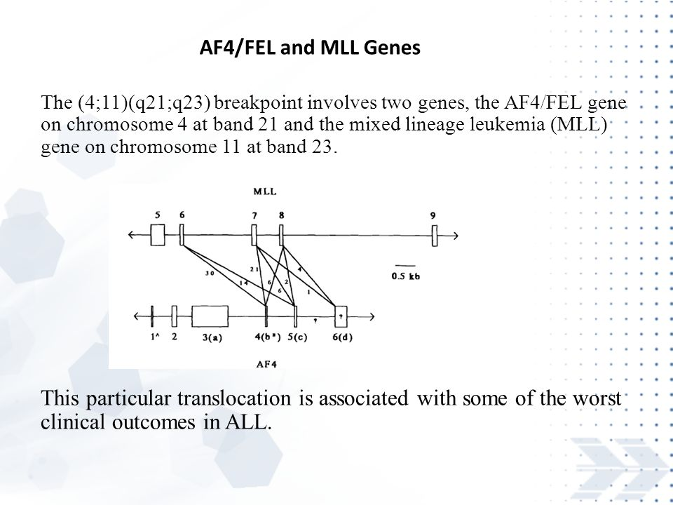 The (4;11)(q21;q23) breakpoint involves two genes, the AF4/FEL gene on chromosome 4 at band 21 and the mixed lineage leukemia (MLL) gene on chromosome