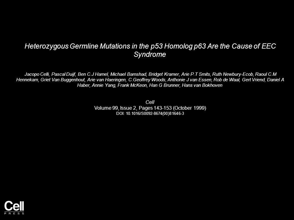 Heterozygous Germline Mutations in the p53 Homolog p63 Are the Cause of EEC Syndrome Jacopo Celli, Pascal Duijf, Ben C.J Hamel, Michael Bamshad, Bridget Kramer, Arie P.T Smits, Ruth Newbury-Ecob, Raoul C.M Hennekam, Griet Van Buggenhout, Arie van Haeringen, C.Geoffrey Woods, Anthonie J van Essen, Rob de Waal, Gert Vriend, Daniel A Haber, Annie Yang, Frank McKeon, Han G Brunner, Hans van Bokhoven Cell Volume 99, Issue 2, Pages 143-153 (October 1999) DOI: 10.1016/S0092-8674(00)81646-3