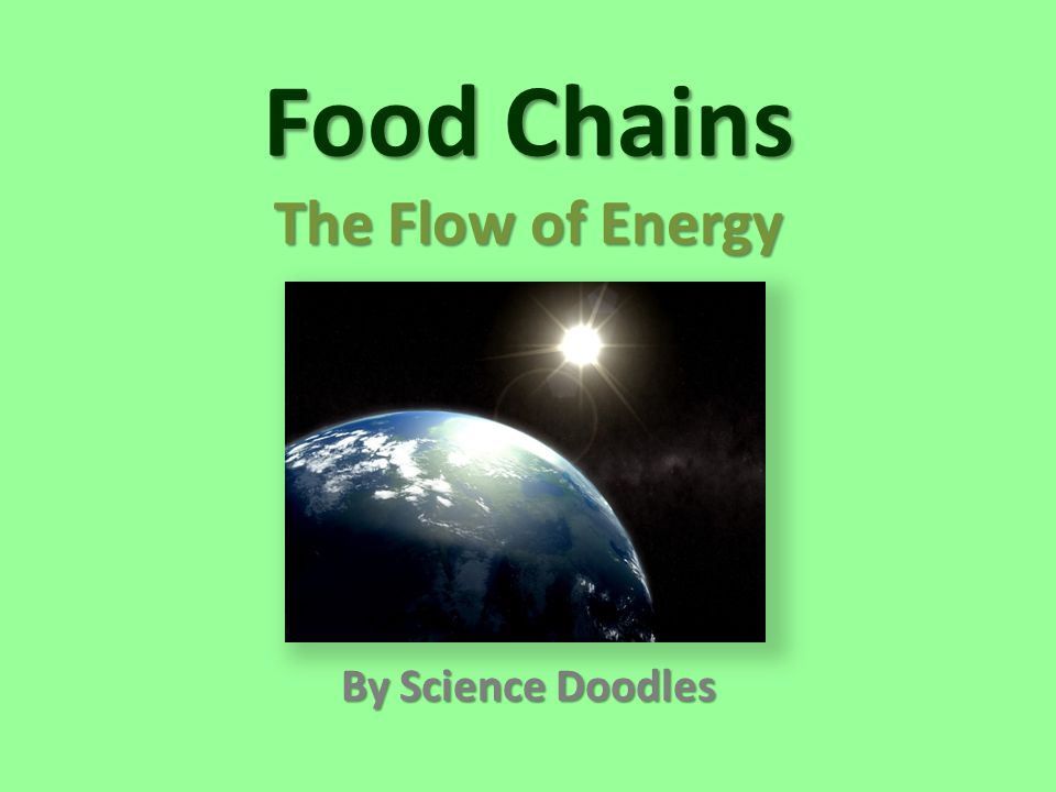 The flow of energy gives energy to grass mouse producer consumer