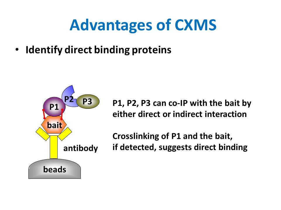 Generating a Standard Dataset for the pLink Software Synthesized 38 peptides, X…X-K-X…X(K/R), each 5-28 aa long Crosslinked all possible peptide pairs–741 in total–with an amine specific crosslinker BS3 Light BS3 d0 Heavy BS3 d4