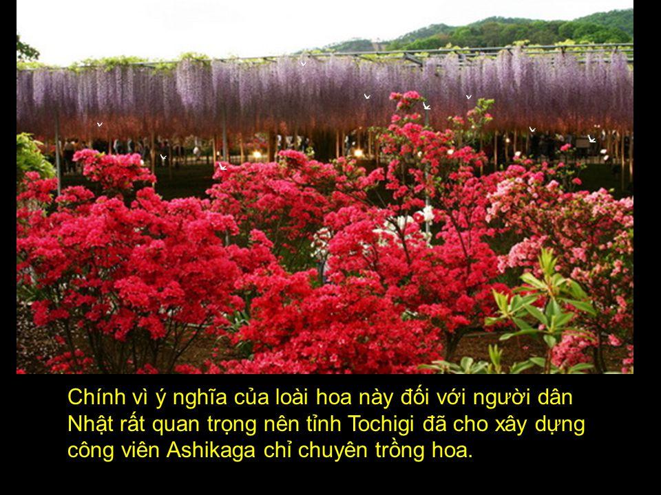 không chỉ ngắm hoa hay chụp ảnh mà còn để nắm tay nhau đi dạo chơi, thư giãn … dưới vườn hoa tình yêu tuyệt đẹp này.