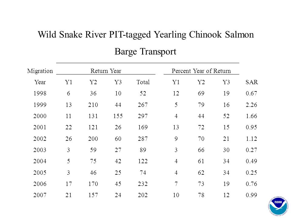 Wild Snake River PIT-tagged Yearling Chinook Salmon Barge Transport MigrationReturn Year Percent Year of Return YearY1Y2Y3TotalY1Y2Y3SAR 1998636105212
