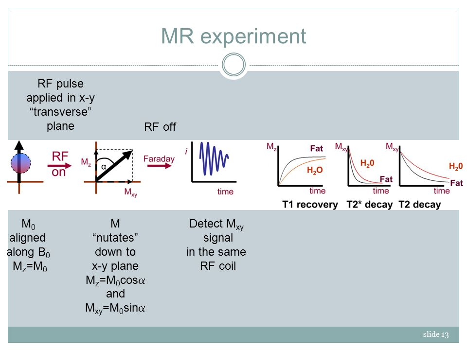 slide 13 MR experiment M 0 aligned along B 0 M z =M 0 RF pulse applied in x-y transverse plane M nutates down to x-y plane M z =M 0 cos  and M xy =M 0 sin  RF off Detect M xy signal in the same RF coil