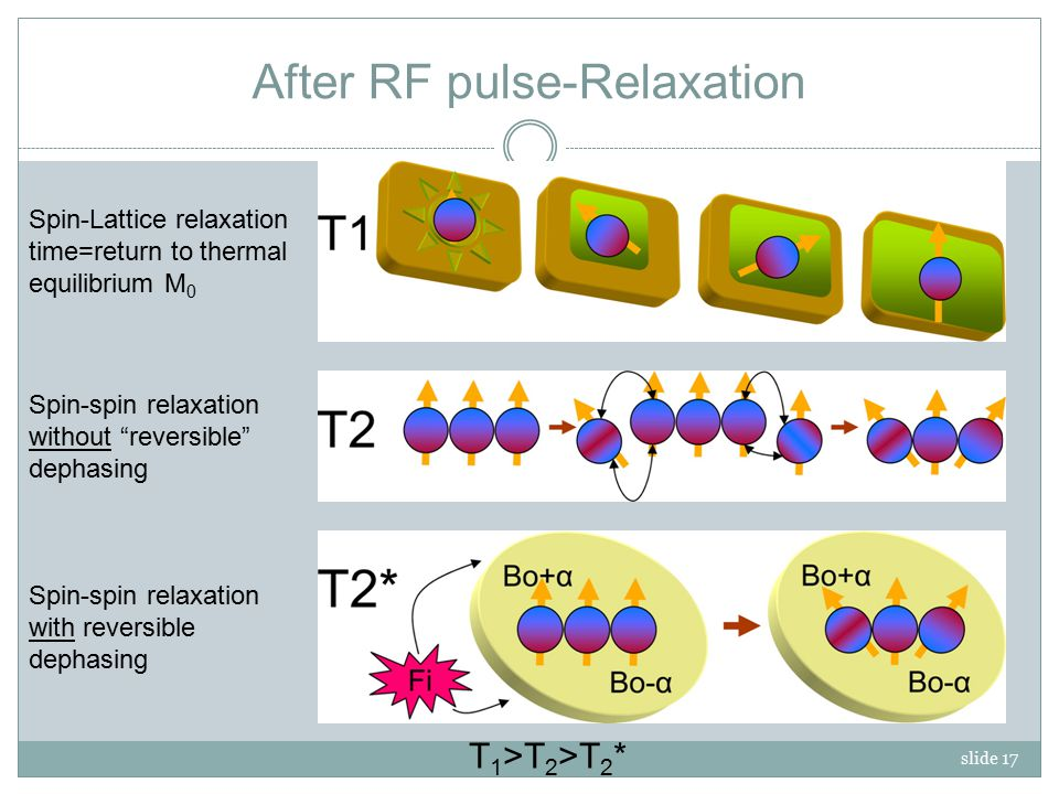 slide 17 After RF pulse-Relaxation Spin-Lattice relaxation time=return to thermal equilibrium M 0 Spin-spin relaxation with reversible dephasing Spin-spin relaxation without reversible dephasing T 1 >T 2 >T 2 *