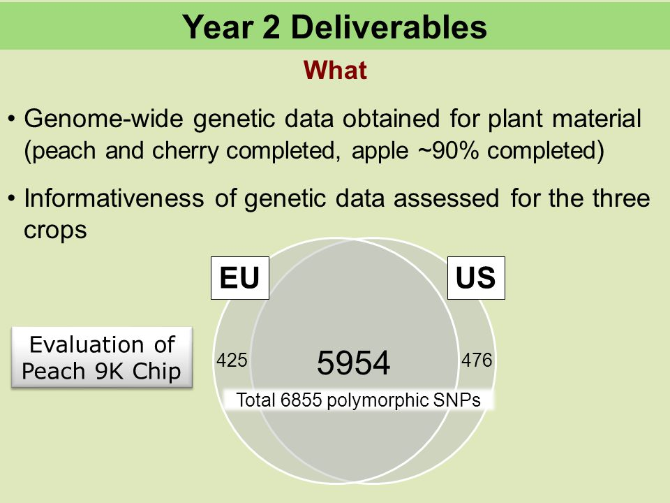 What Genome-wide genetic data obtained for plant material ( peach and cherry completed, apple ~90% completed ) Informativeness of genetic data assessed for the three crops Year 2 Deliverables 5954 425476 Total 6855 polymorphic SNPs EUUS Evaluation of Peach 9K Chip