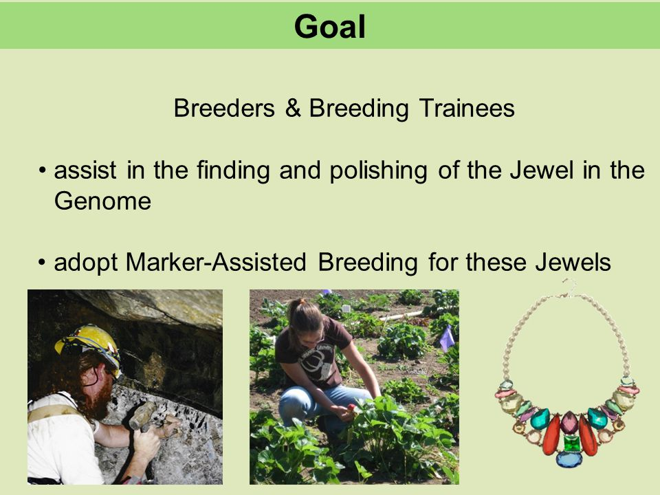 Breeders & Breeding Trainees assist in the finding and polishing of the Jewel in the Genome adopt Marker-Assisted Breeding for these Jewels Goal