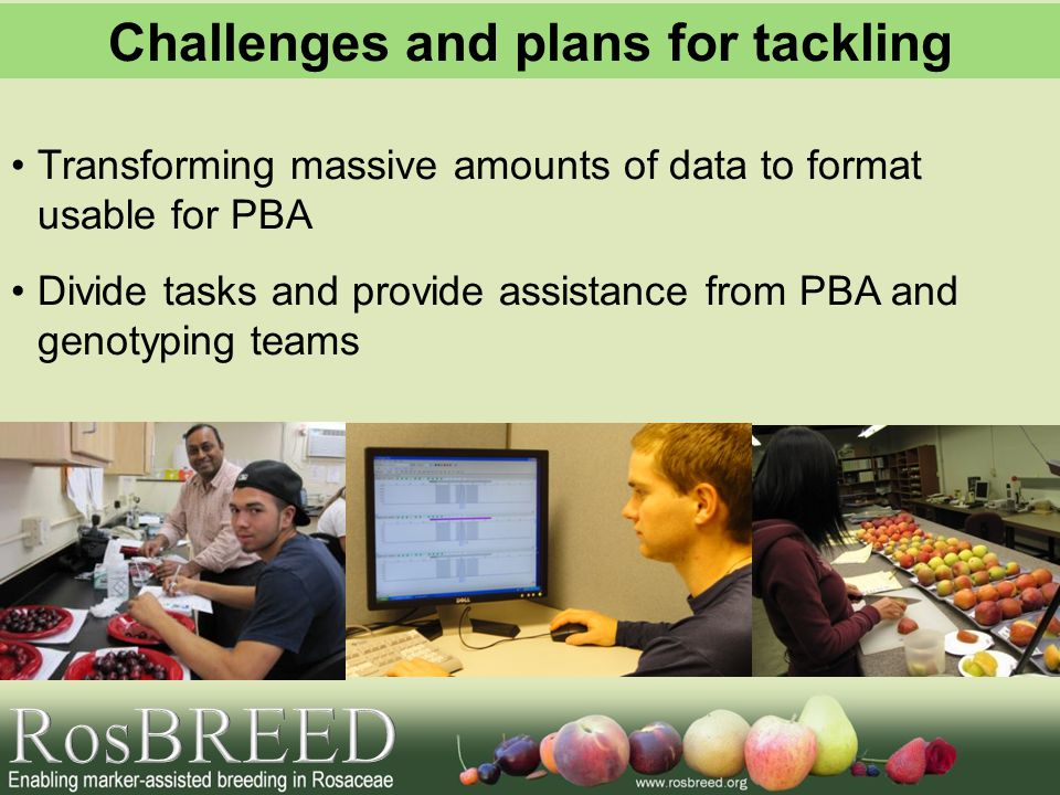 Transforming massive amounts of data to format usable for PBA Divide tasks and provide assistance from PBA and genotyping teams Challenges and plans for tackling