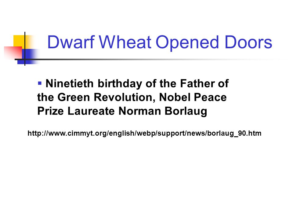  Ninetieth birthday of the Father of the Green Revolution, Nobel Peace Prize Laureate Norman Borlaug http://www.cimmyt.org/english/webp/support/news/borlaug_90.htm Dwarf Wheat Opened Doors