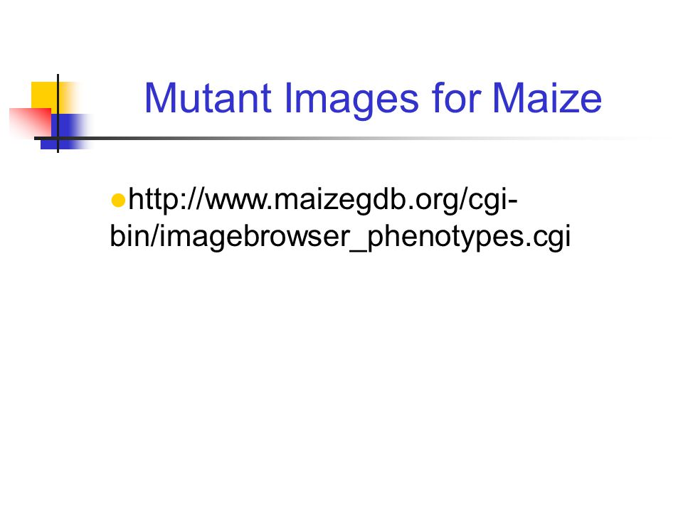 http://www.maizegdb.org/cgi- bin/imagebrowser_phenotypes.cgi Mutant Images for Maize