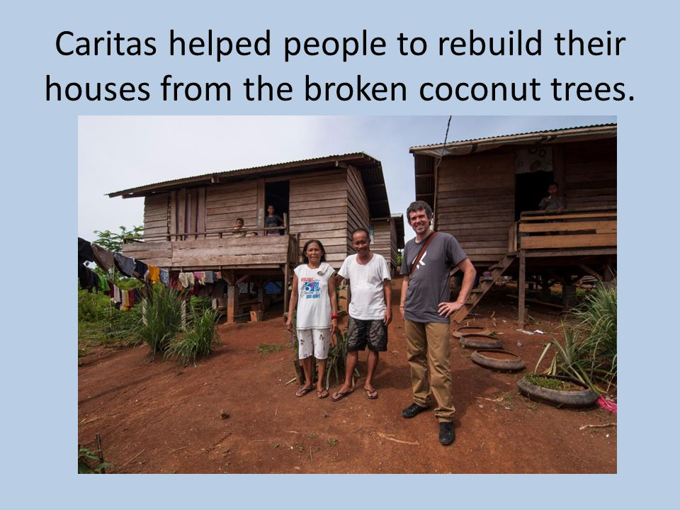 Caritas helped people to rebuild their houses from the broken coconut trees.