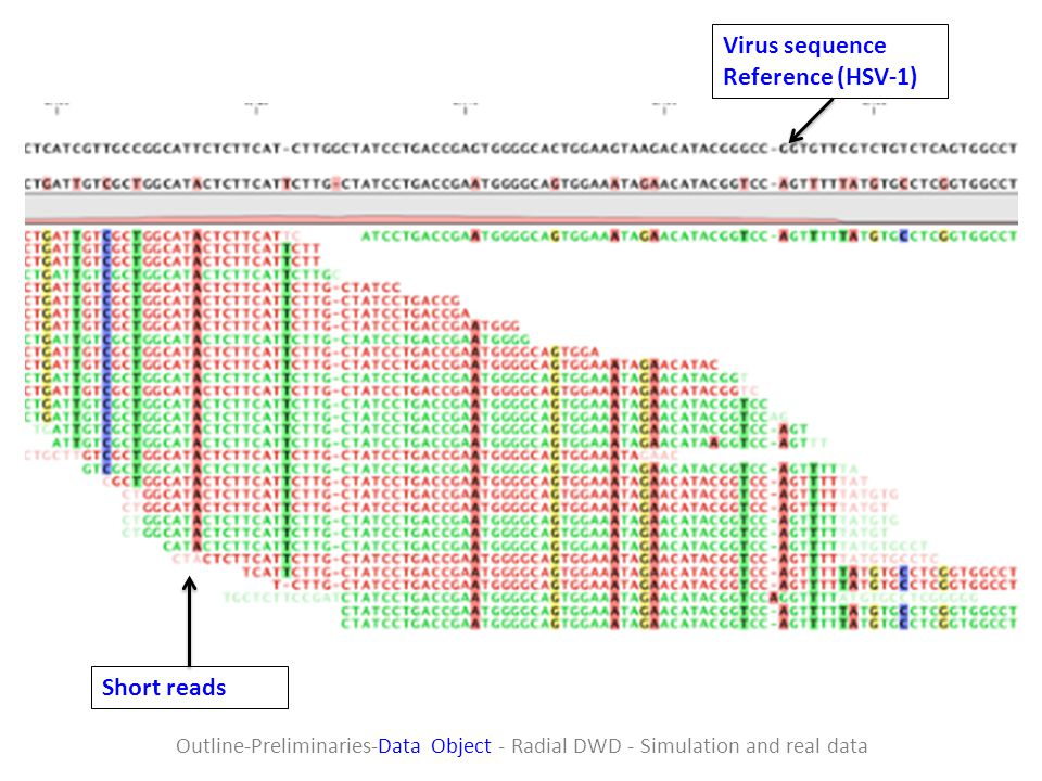 Virus sequence Reference (HSV-1) Short reads
