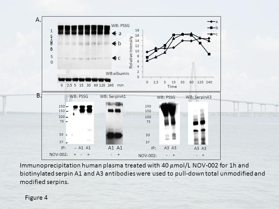 a c b WB: PSSG WB:albumin 0 2.5 5 15 30 60 120 240 min 75 75 5050 100100 150150 Figure 4 Time Relative Intensity 40μM NOV-002; 20μg plasma A3 IP: WB: