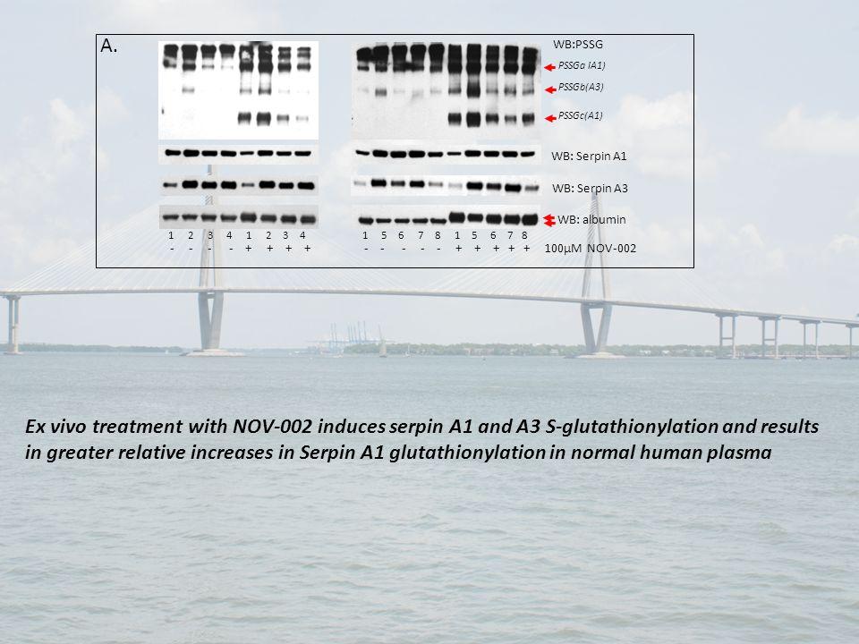 WB:PSSG WB: albumin 1 2 3 4 1 2 3 4 1 5 6 7 8 1 5 6 7 8 - - - - + + + + - - - - - + + + + + 100μM NOV-002 WB: Serpin A3 WB: Serpin A1 A. PSSGa IA1) PS