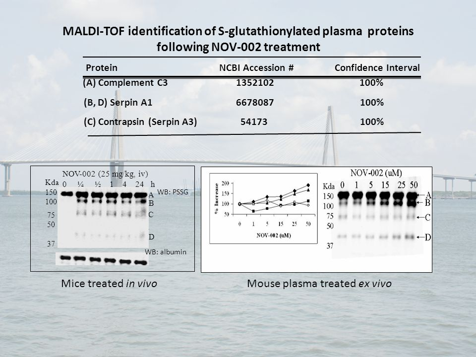 MALDI-TOF identification of S-glutathionylated plasma proteins following NOV-002 treatment Protein NCBI Accession # Confidence Interval (A) Complement C3 1352102 100% (B, D) Serpin A1 6678087 100% (C) Contrapsin (Serpin A3) 54173 100% A B C D Kda 150 100 75 50 37 NOV-002 (25 mg/kg, iv) 0 ¼ ½ 1 4 24 h WB: PSSG WB: albumin A Mice treated in vivo Mouse plasma treated ex vivo
