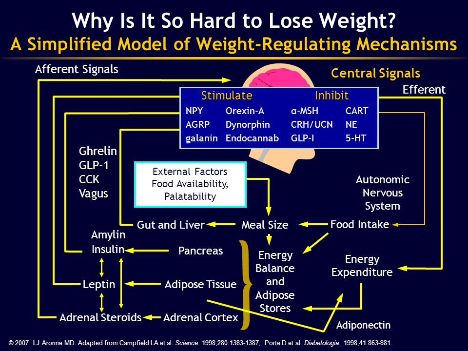 Food Intake Gut and Liver Pancreas Autonomic Nervous System Energy Expenditure Adipose Tissue © 2007 LJ Aronne MD. Adapted from Campfield LA et al. Sc