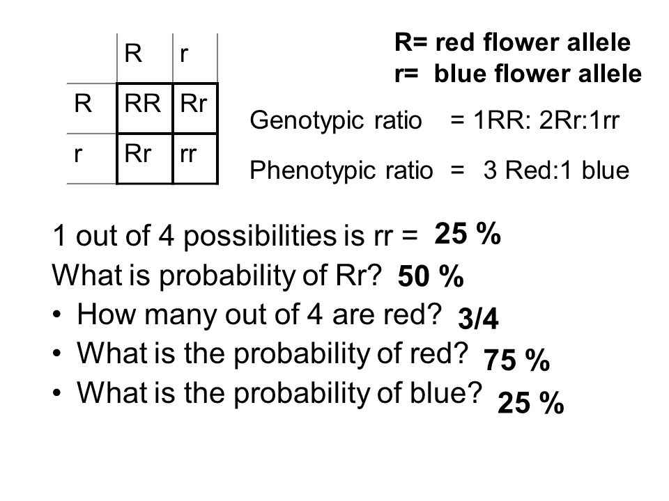 1 out of 4 possibilities is rr = What is probability of Rr.