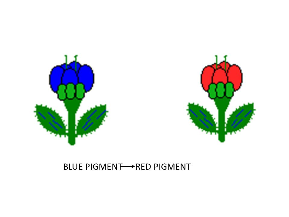 BLUE PIGMENT RED PIGMENT