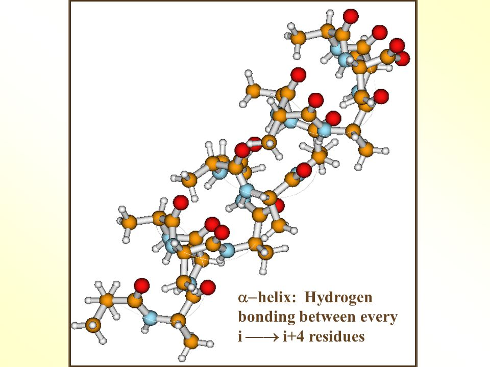  helix: Hydrogen bonding between every i  i+4 residues