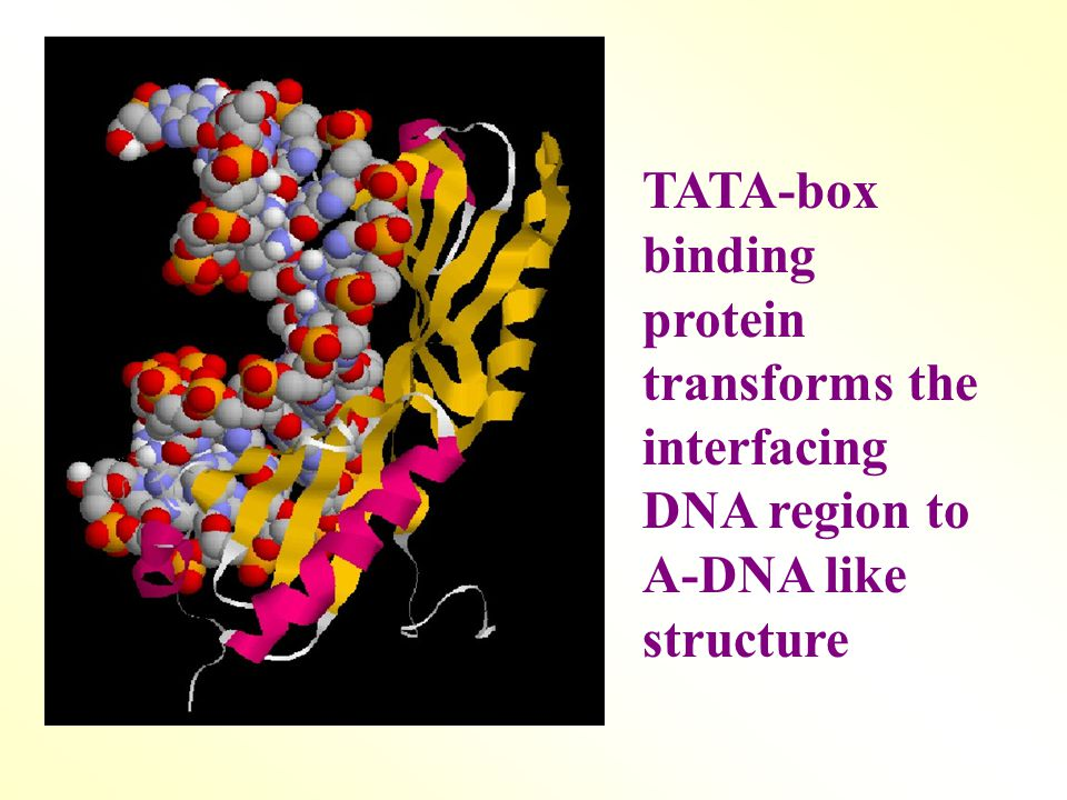 TATA-box binding protein transforms the interfacing DNA region to A-DNA like structure