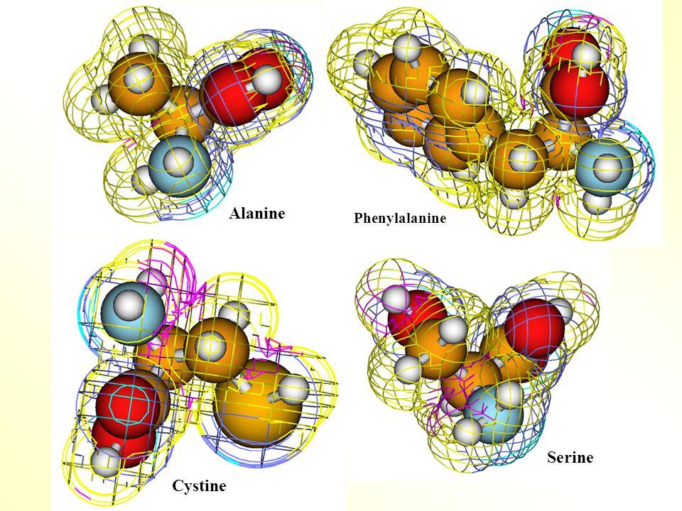Alanine Phenylalanine Serine Cystine