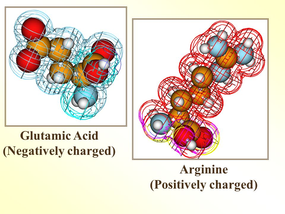Glutamic Acid (Negatively charged) Arginine (Positively charged)