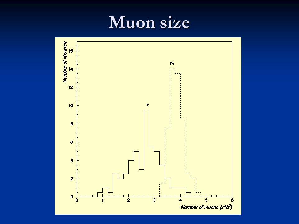 Muon size