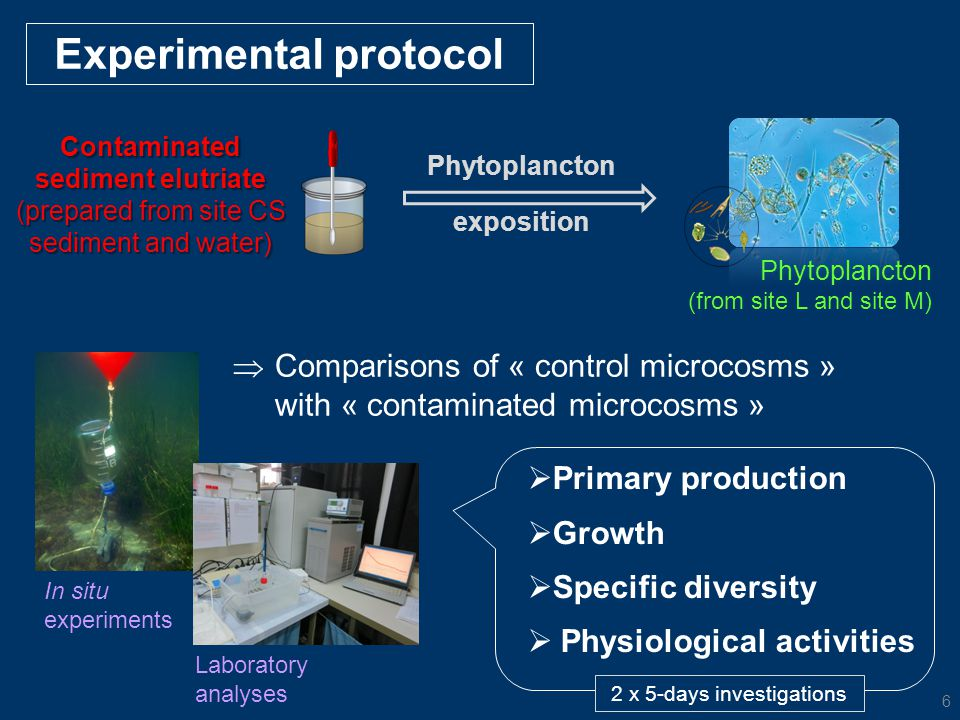  Primary production  Growth  Specific diversity  Physiological activities Experimental protocol In situ experiments Laboratory analyses 2 x 5-days