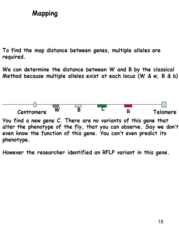 15 Mapping To find the map distance between genes, multiple alleles are required.