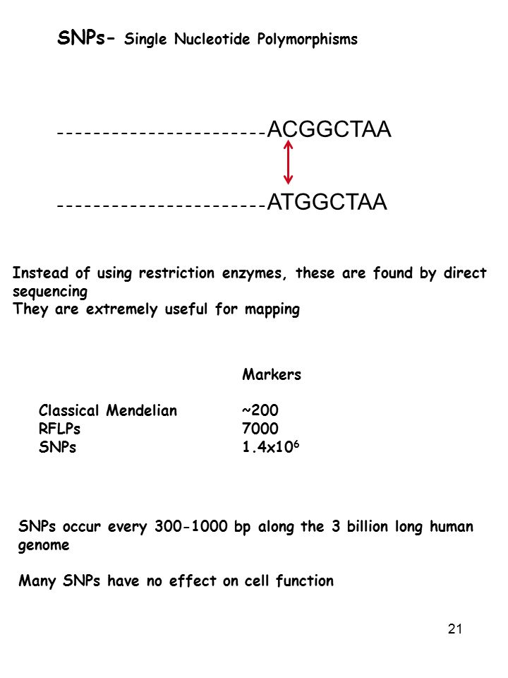 21 SNPs- Single Nucleotide Polymorphisms Instead of using restriction enzymes, these are found by direct sequencing They are extremely useful for mapping Markers Classical Mendelian~200 RFLPs7000 SNPs1.4x10 6 ----------------------- ACGGCTAA ----------------------- ATGGCTAA SNPs occur every 300-1000 bp along the 3 billion long human genome Many SNPs have no effect on cell function