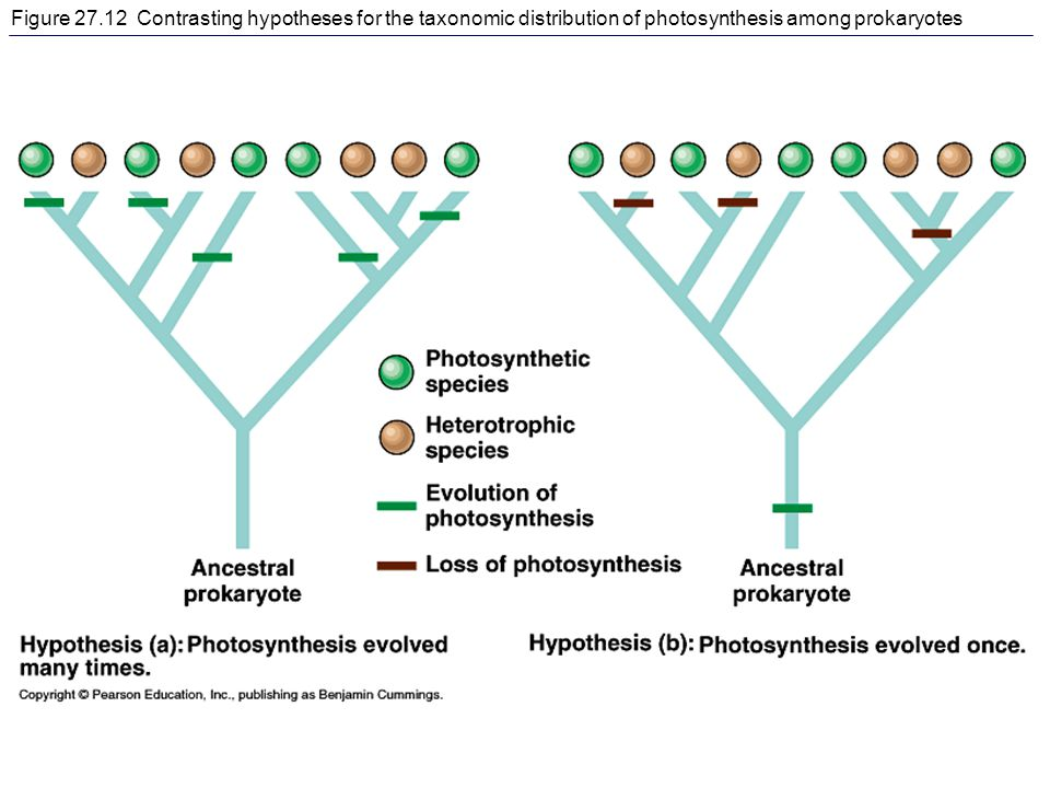 Figure 27.12 Contrasting hypotheses for the taxonomic distribution of photosynthesis among prokaryotes