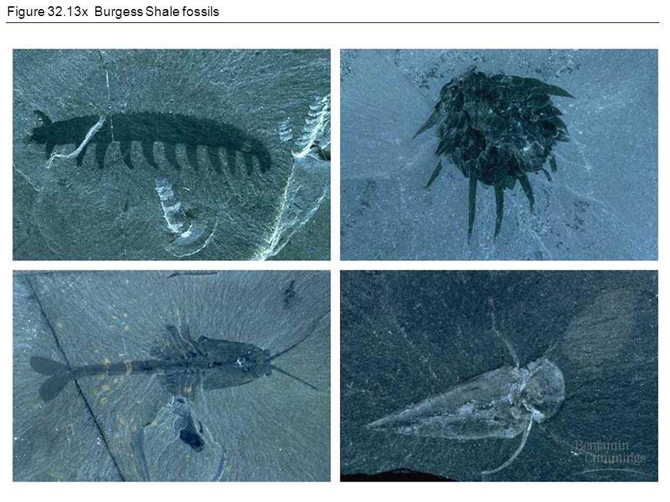 Figure 32.13x Burgess Shale fossils
