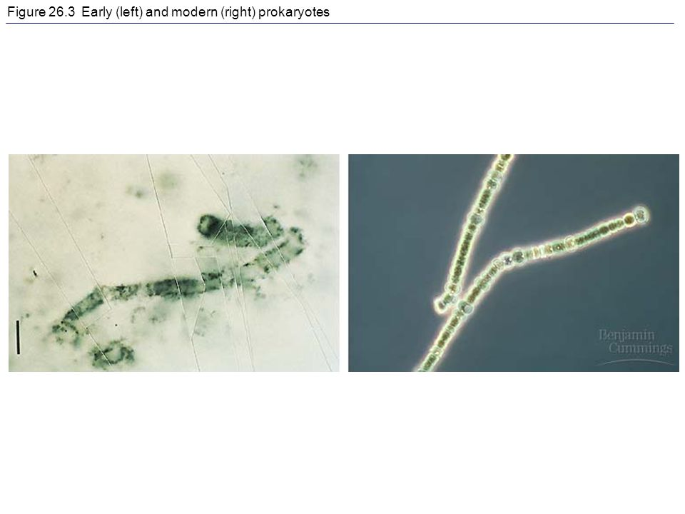 Figure 26.3 Early (left) and modern (right) prokaryotes
