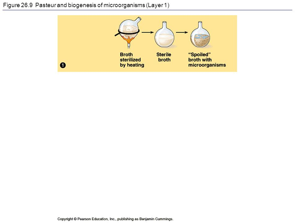 Figure 26.9 Pasteur and biogenesis of microorganisms (Layer 1)