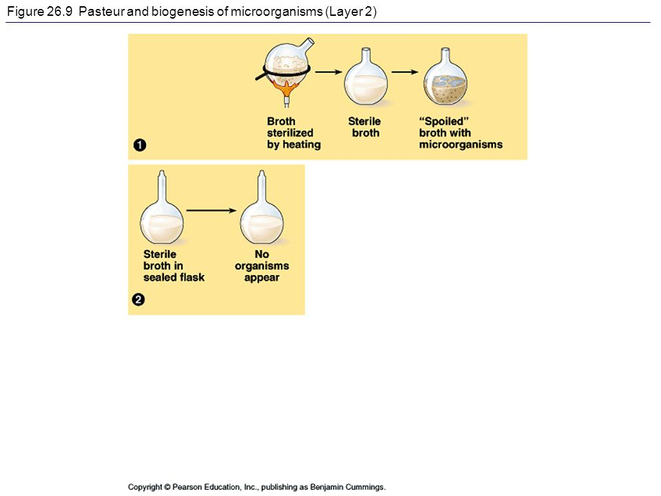 Figure 26.9 Pasteur and biogenesis of microorganisms (Layer 2)