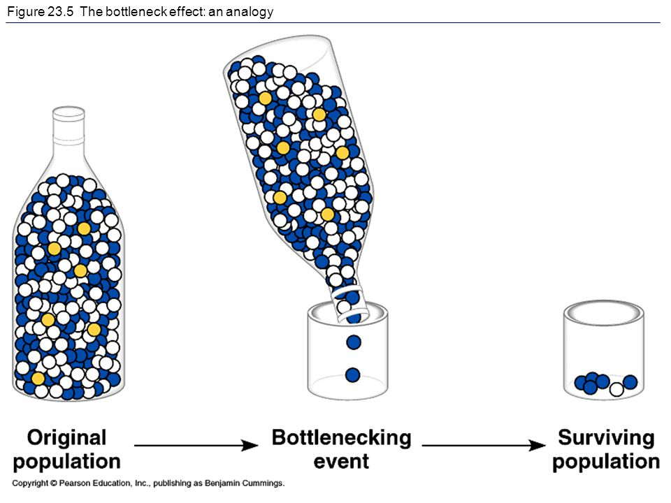 Figure 23.5 The bottleneck effect: an analogy