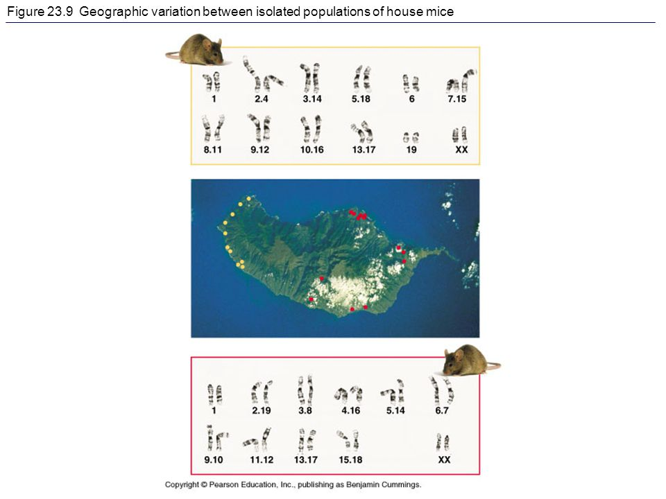 Figure 23.9 Geographic variation between isolated populations of house mice
