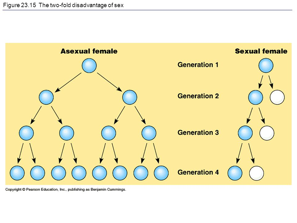 Figure 23.15 The two-fold disadvantage of sex