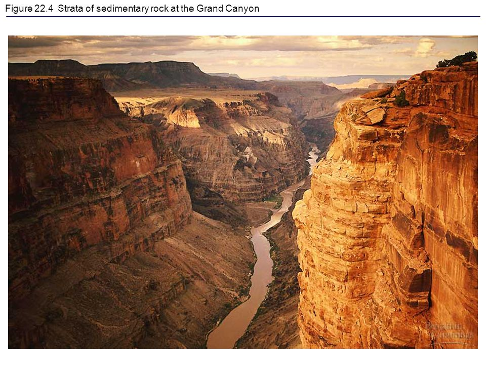 Figure 22.4 Strata of sedimentary rock at the Grand Canyon