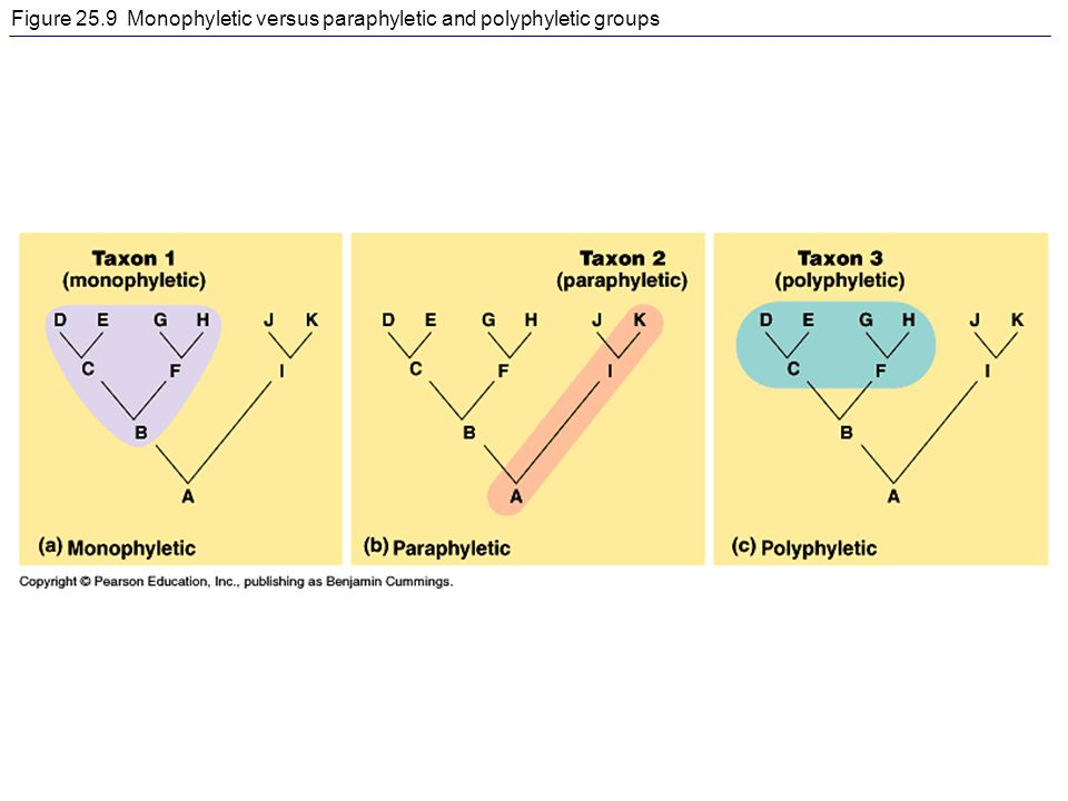 Figure 25.9 Monophyletic versus paraphyletic and polyphyletic groups