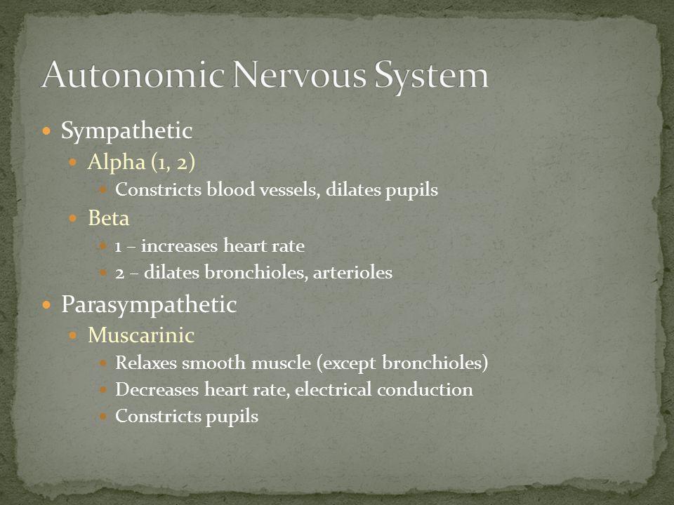 Sympathetic Alpha (1, 2) Constricts blood vessels, dilates pupils Beta 1 – increases heart rate 2 – dilates bronchioles, arterioles Parasympathetic Mu