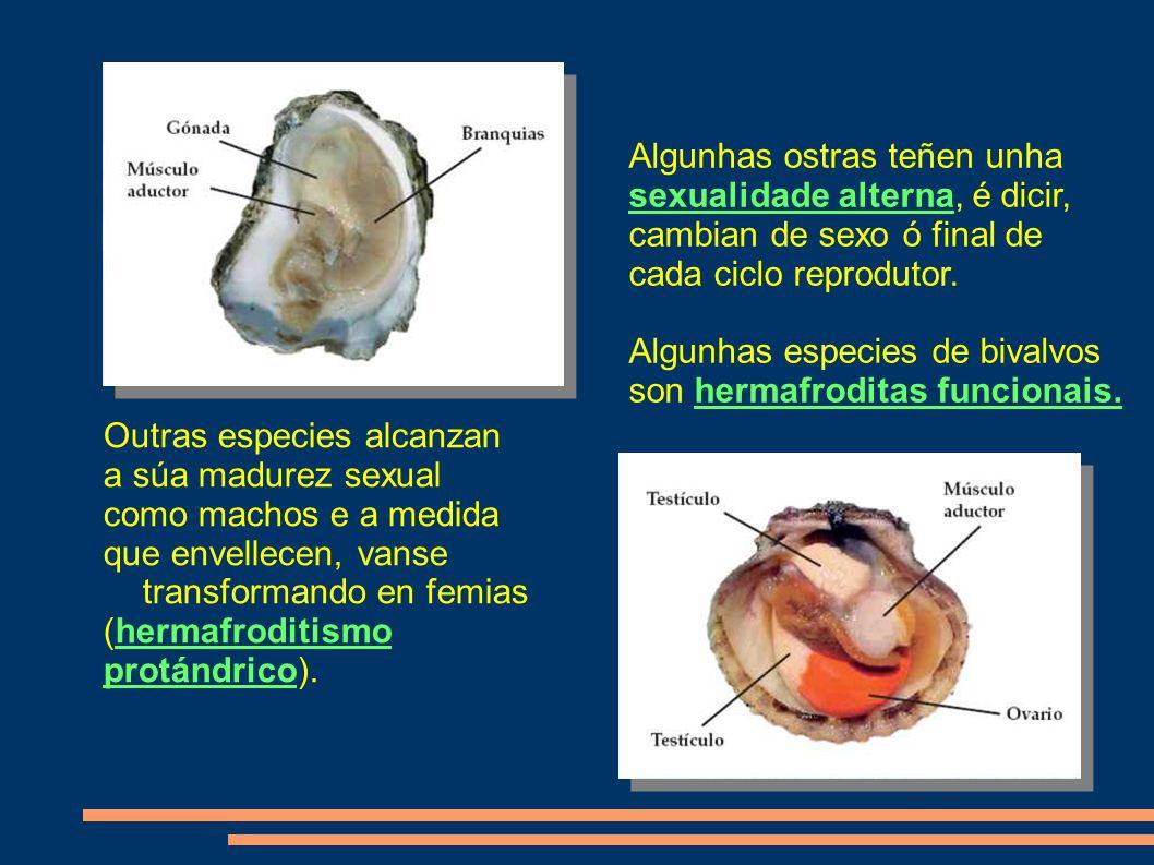 Outras especies alcanzan a súa madurez sexual como machos e a medida que envellecen, vanse transformando en femias (hermafroditismo protándrico).