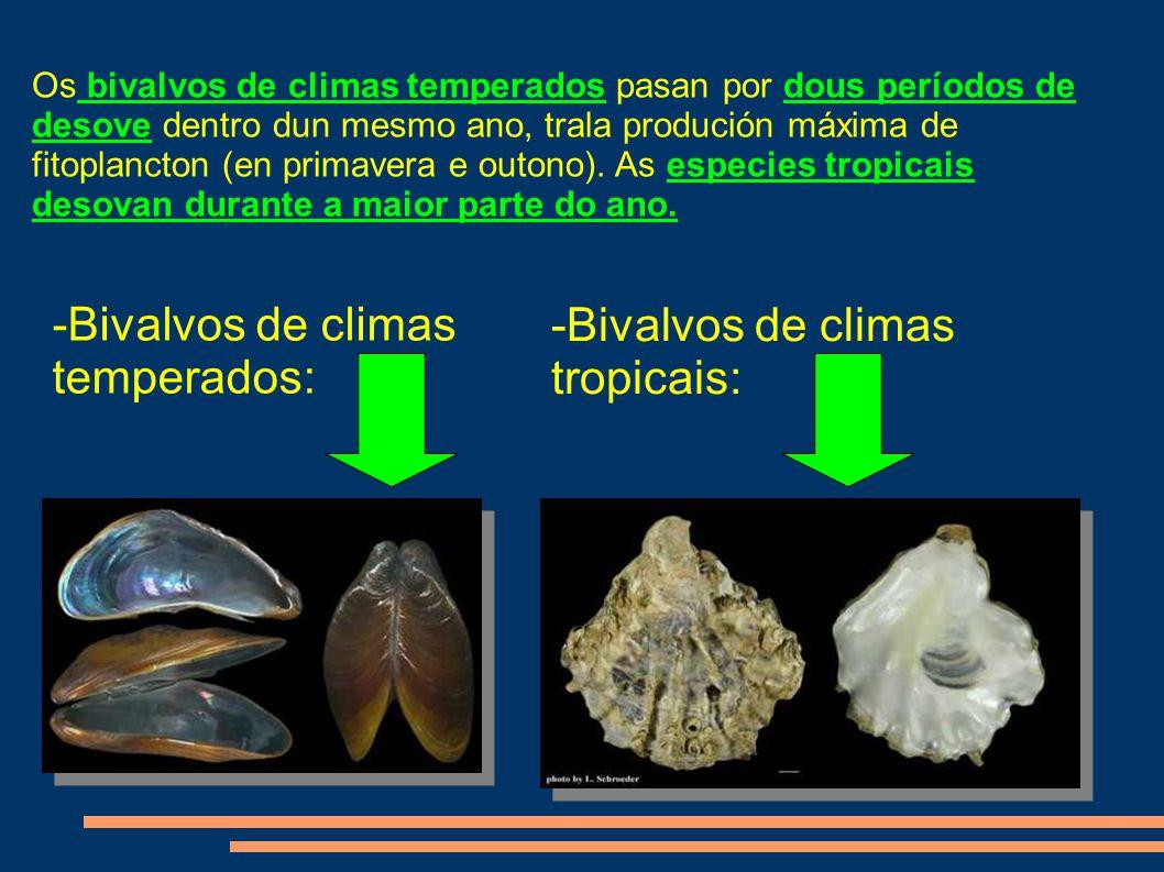 -Bivalvos de climas temperados: -Bivalvos de climas tropicais: Os bivalvos de climas temperados pasan por dous períodos de desove dentro dun mesmo ano, trala produción máxima de fitoplancton (en primavera e outono).