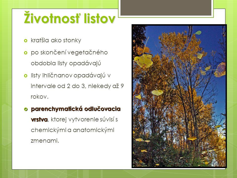 Životnosť listov  kratšia ako stonky  po skončení vegetačného obdobia listy opadávajú  listy ihličnanov opadávajú v intervale od 2 do 3, niekedy až 9 rokov.