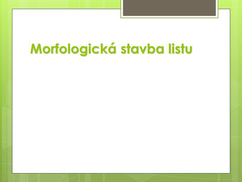 Morfologická stavba listu