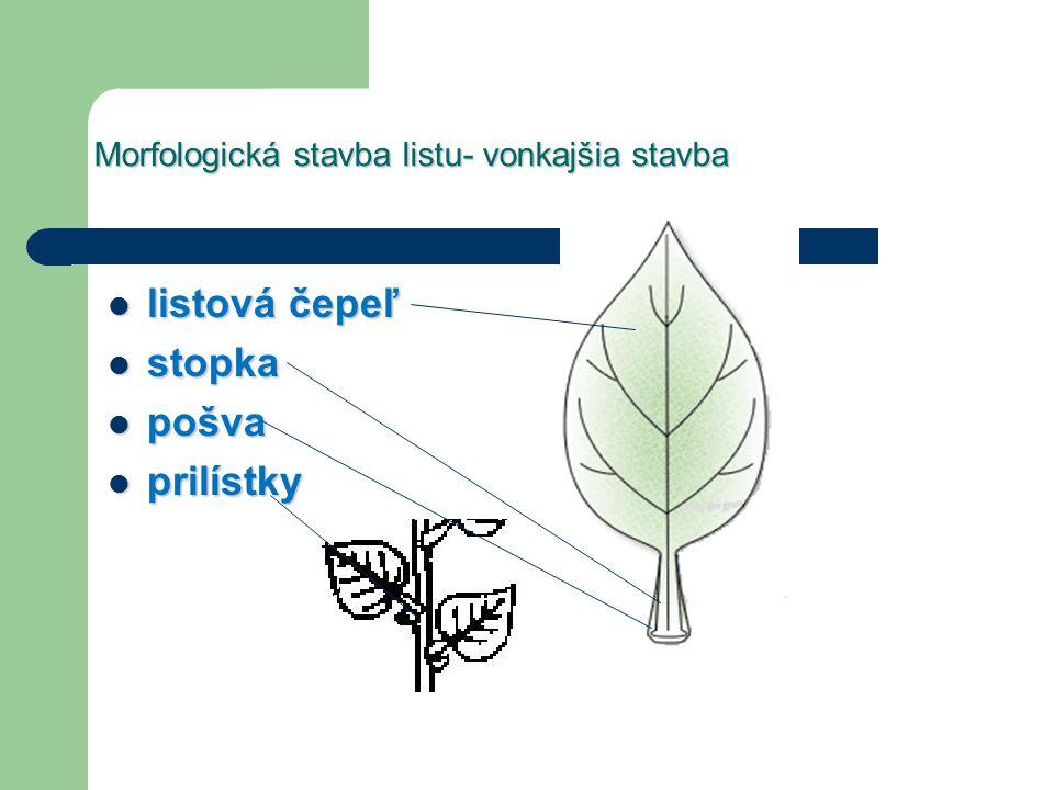 Morfologická stavba listu- vonkajšia stavba listová čepeľ listová čepeľ stopka stopka pošva pošva prilístky prilístky