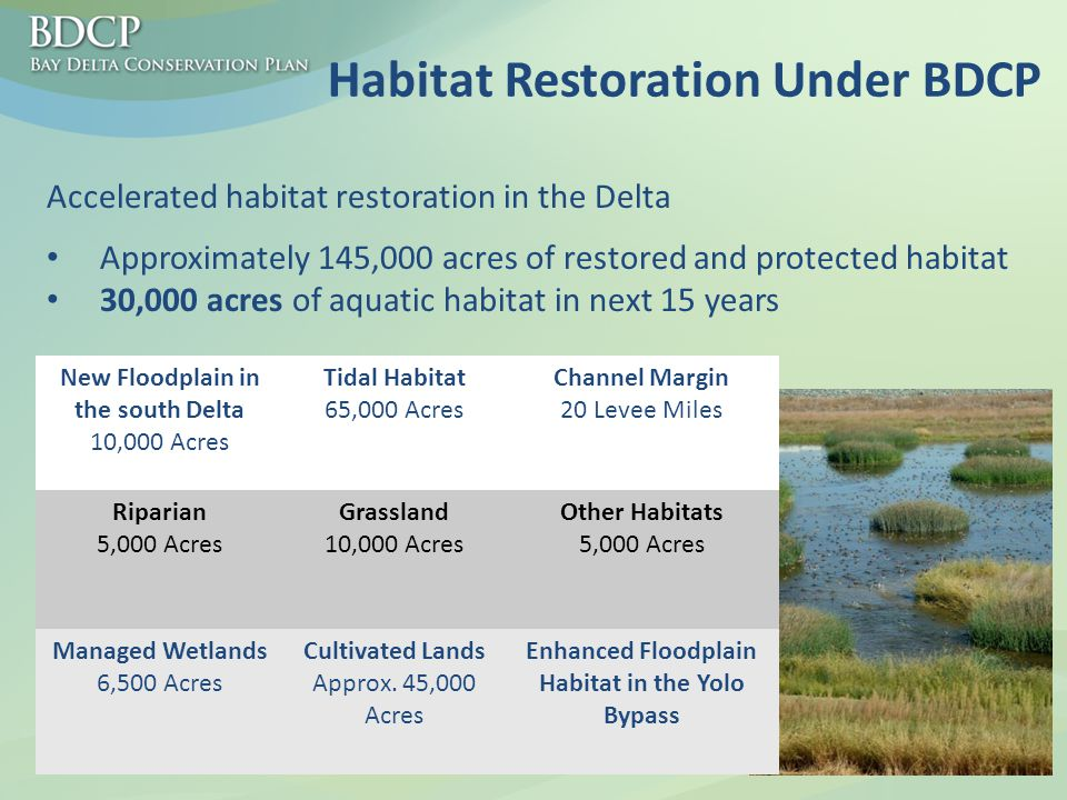 Habitat Restoration Under BDCP Approximately 145,000 acres of restored and protected habitat 30,000 acres of aquatic habitat in next 15 years Accelerated habitat restoration in the Delta New Floodplain in the south Delta 10,000 Acres Tidal Habitat 65,000 Acres Channel Margin 20 Levee Miles Riparian 5,000 Acres Grassland 10,000 Acres Other Habitats 5,000 Acres Managed Wetlands 6,500 Acres Cultivated Lands Approx.