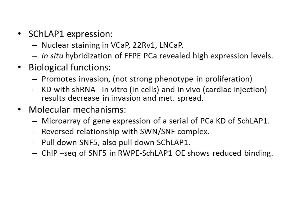 SChLAP1 expression: – Nuclear staining in VCaP, 22Rv1, LNCaP.